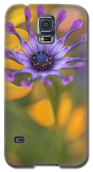 Galaxy S5 Case featuring the photograph South African Daisy by Jacqui Boonstra