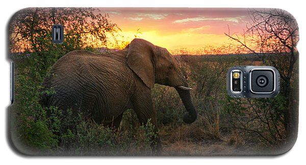 South African Elephant At Sunset - Black Rhino Reserve Galaxy S5 Case by Menega Sabidussi