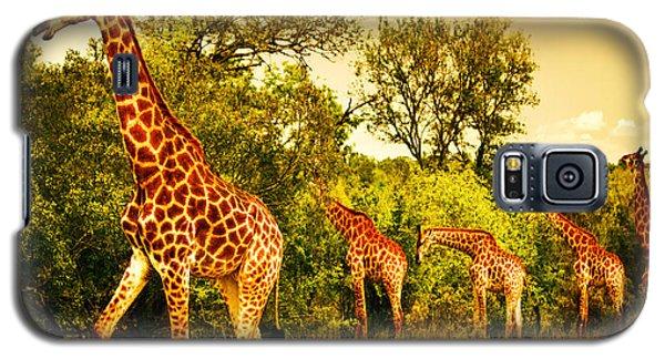 South African Giraffes Galaxy S5 Case