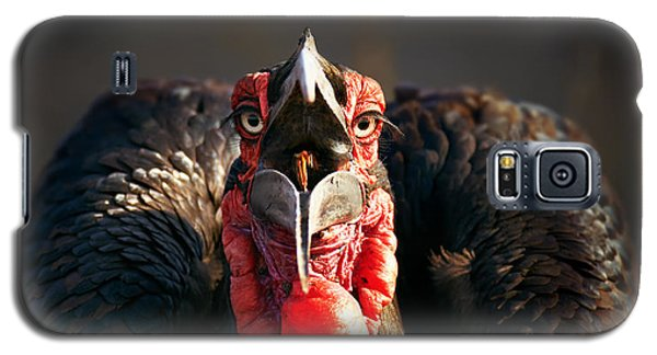 Southern Ground Hornbill Swallowing A Seed Galaxy S5 Case