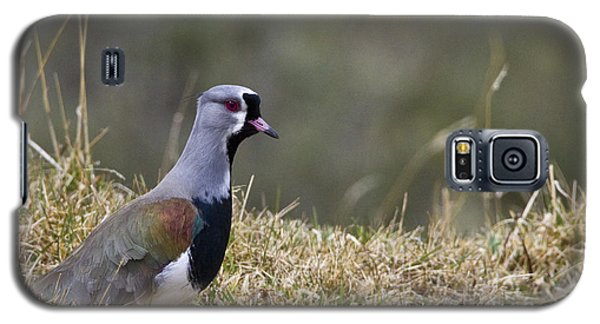 Southern Lapwing Galaxy S5 Case