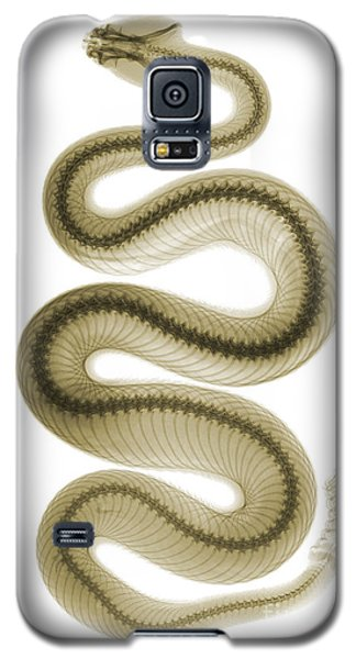 Southern Pacific Rattlesnake, X-ray Galaxy S5 Case by Ted Kinsman