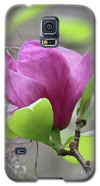 Saucer Magnolia Galaxy S5 Case - Southern Pink Magnolia by Carol Groenen