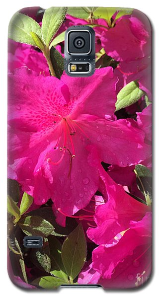 Southern Pink Galaxy S5 Case