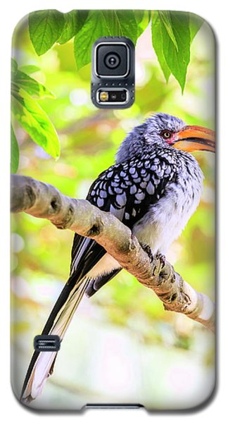 Galaxy S5 Case featuring the photograph Southern Yellow Billed Hornbill by Alexey Stiop
