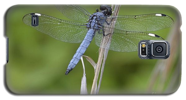 Galaxy S5 Case featuring the photograph Spangled Skimmer by Randy Bodkins