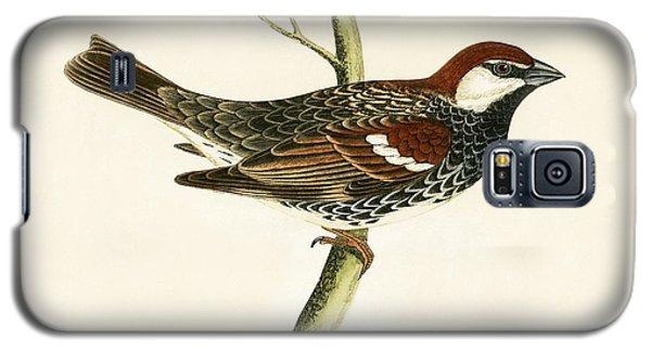 Spanish Sparrow Galaxy S5 Case by English School