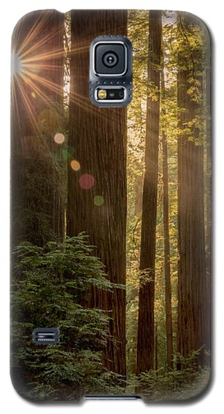 Sparkle In The Redwoods Galaxy S5 Case