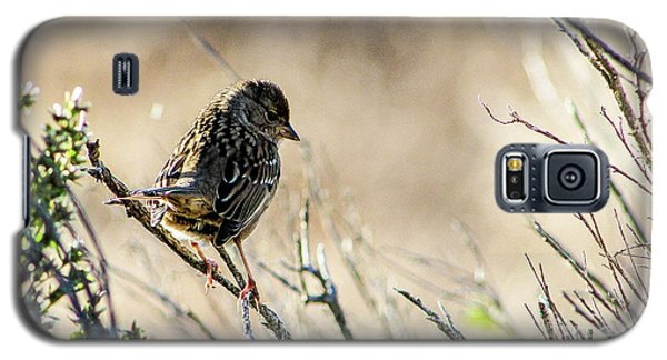 Snarky Sparrow Galaxy S5 Case