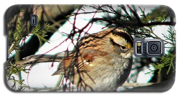 Sparrow In The Snow Galaxy S5 Case
