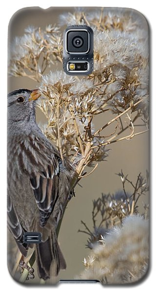 Sparrow Galaxy S5 Case