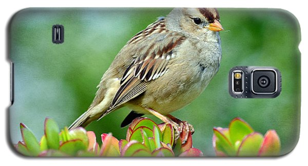 Sparrow Song 9 Galaxy S5 Case by Fraida Gutovich