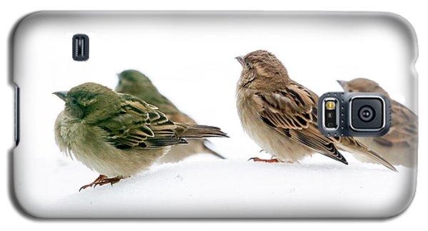 Sparrows In The Snow Galaxy S5 Case
