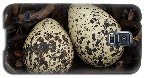 Speckled Killdeer Eggs By Jean Noren Galaxy S5 Case by Jean Noren