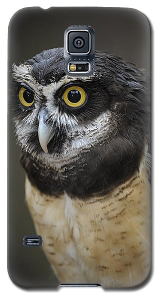 Galaxy S5 Case featuring the photograph Spectacled Owl by Tyson and Kathy Smith