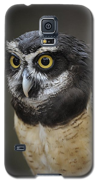 Spectacled Owl Galaxy S5 Case