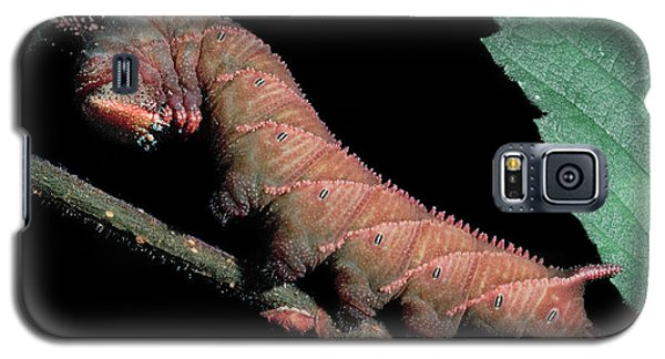 Sphinx Moth Caterpillar Galaxy S5 Case