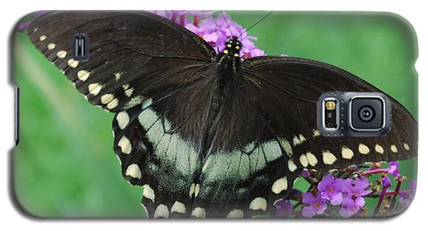 Spicebush Swallowtail Galaxy S5 Case