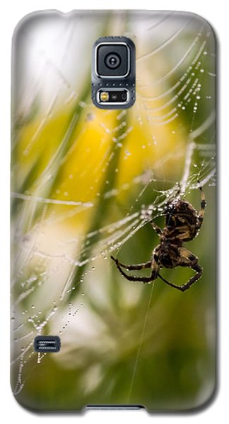 Spider And Spider Web With Dew Drops 04 Galaxy S5 Case