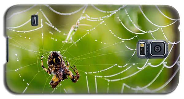 Spider And Spider Web With Dew Drops 05 Galaxy S5 Case