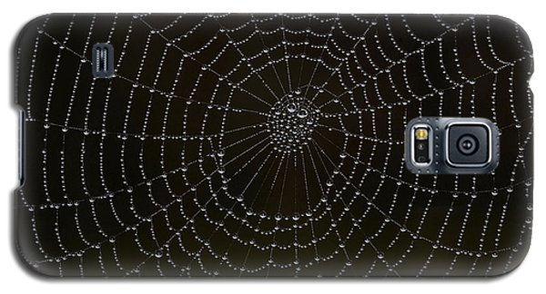 Spider Cobweb  Galaxy S5 Case