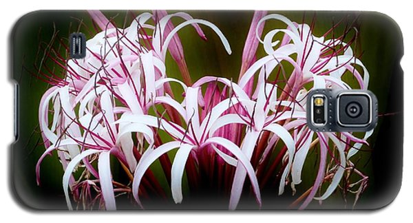 Spider Lilly Galaxy S5 Case by Amar Sheow