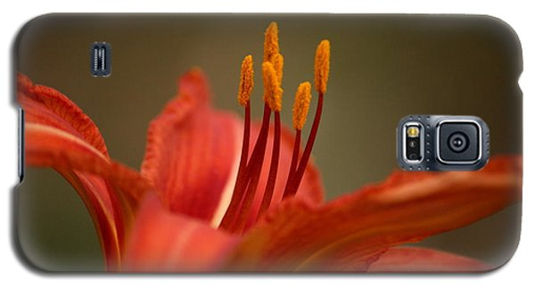 Galaxy S5 Case featuring the photograph Spider Lily by Cathy Harper