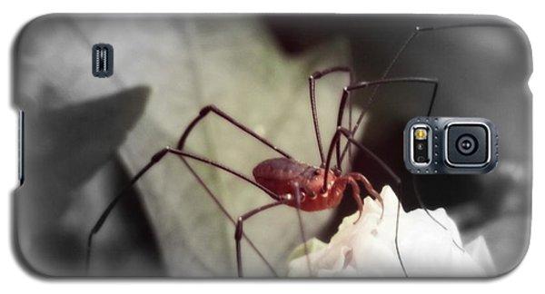 Spider On A Flower Galaxy S5 Case