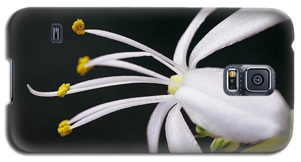 Spider Plant Flower Galaxy S5 Case