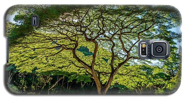 Spider Tree Galaxy S5 Case