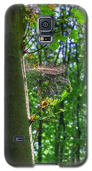 Spider Web In A Forest Galaxy S5 Case