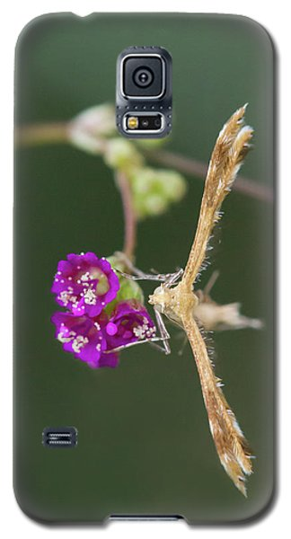 Spiderling Plume Moth On Wineflower Galaxy S5 Case