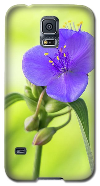 Spiderwort Wildflower Galaxy S5 Case