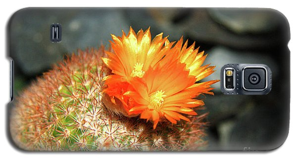 Spiky Little Cactus With Orange Flower Galaxy S5 Case