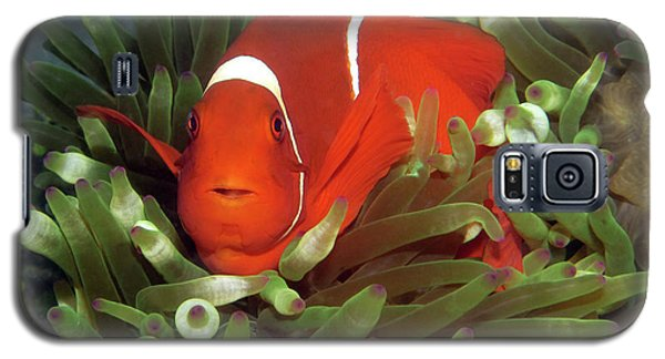 Spinecheek Anemonefish, Indonesia 2 Galaxy S5 Case