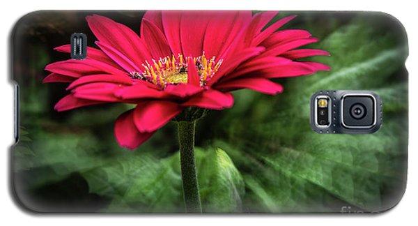 Spiral Pink Flower Focus Galaxy S5 Case