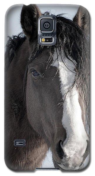 Spirit Horse Galaxy S5 Case