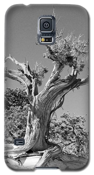 Galaxy S5 Case featuring the photograph Spirit Tree by Maggy Marsh