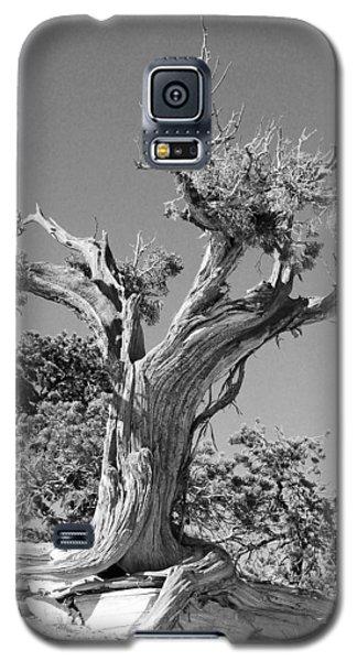 Spirit Tree Galaxy S5 Case