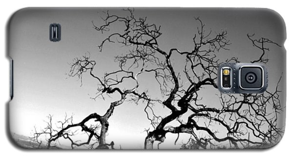 Split Single Tree On Hillside - Black And White Galaxy S5 Case