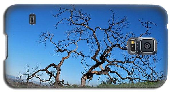 Split Single Tree On Hillside Galaxy S5 Case