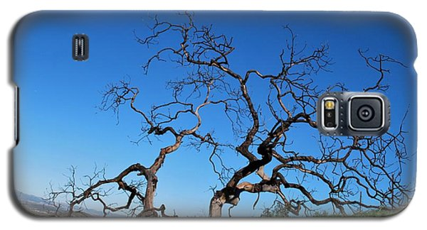 Split Single Tree On Hillside Galaxy S5 Case