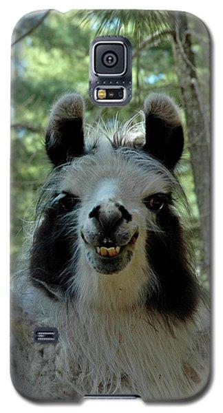 Galaxy S5 Case featuring the photograph Spooky Llama by LeeAnn McLaneGoetz McLaneGoetzStudioLLCcom