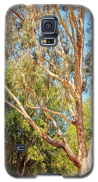 Galaxy S5 Case featuring the photograph Spot The Koala, Yanchep National Park by Dave Catley