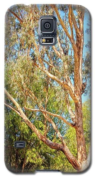 Spot The Koala, Yanchep National Park Galaxy S5 Case