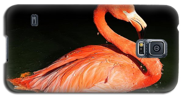 Spotlight On A Bathing Flamingo Galaxy S5 Case