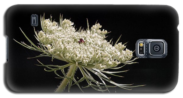 Spotlight On The Queen Galaxy S5 Case by Angie Rea