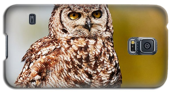 Galaxy S5 Case featuring the photograph Spotted Eagle-owl In A Tree by Nick  Biemans
