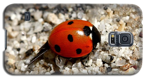 Spotted Ladybug Wings Dragging In Sand Galaxy S5 Case by Tracie Kaska