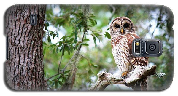Spotted Owl II Galaxy S5 Case
